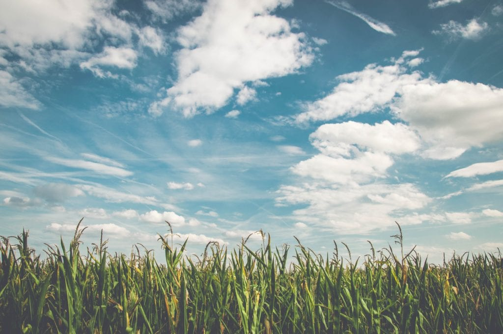 clouds-cornfield-countryside-158827